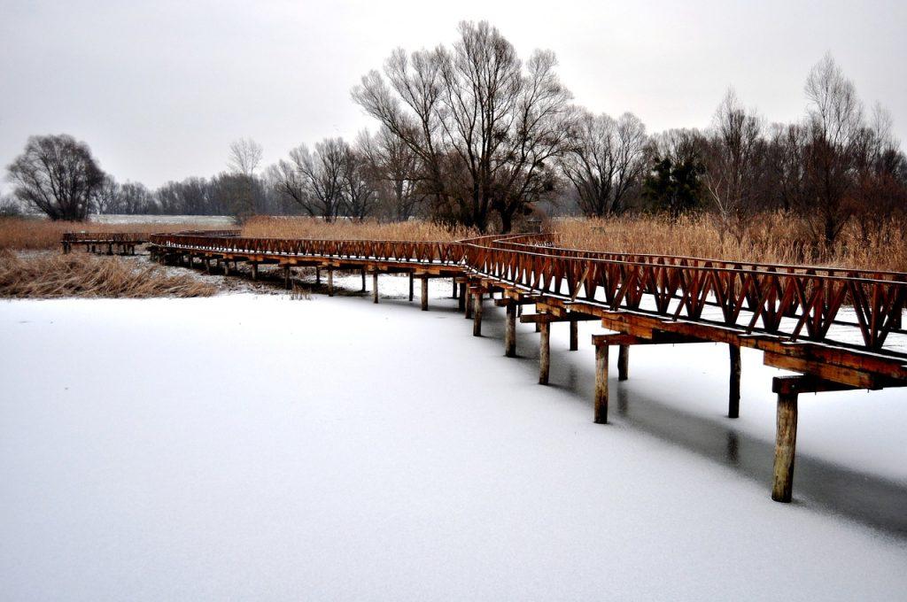Kopački Rit v zime